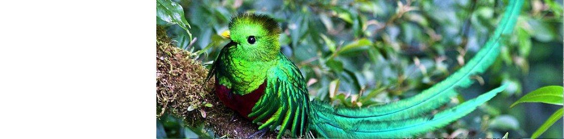 De quetzal <br>vogel